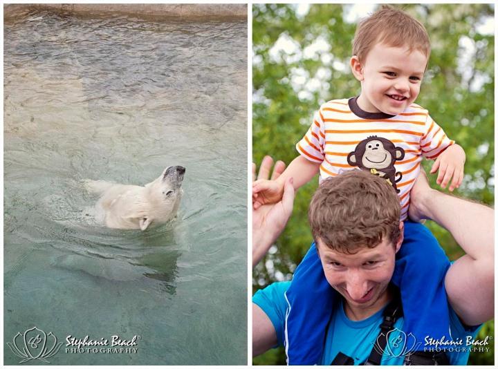 Toronto Zoo Polar Bear