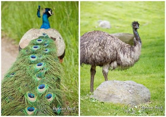 Toronto Zoo Peacock Toronto Zoo Emu