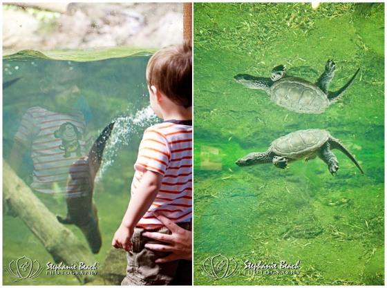 Toronto Zoo Otter Toronto Zoo Turtle