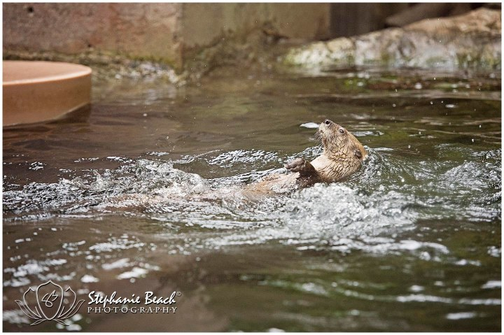 Toronto Zoo Otter