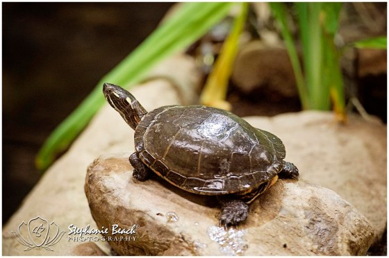 Toronto Zoo Turtle