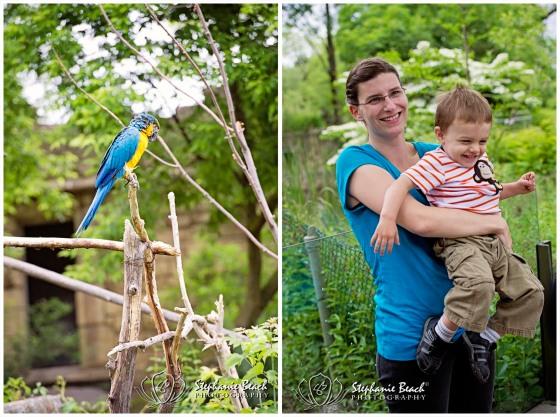 Toronto Zoo Maccaw