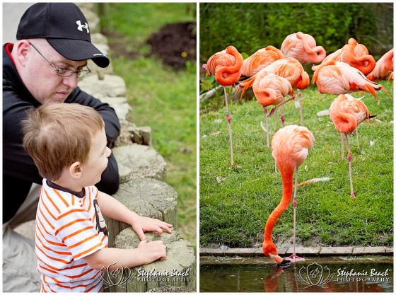 Toronto Zoo Flamingoes