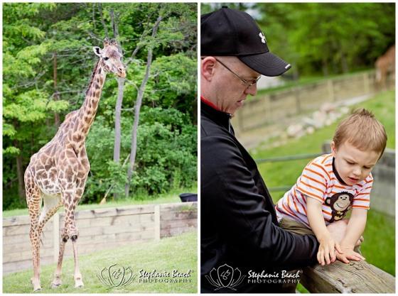 Toronto Zoo Giraffe