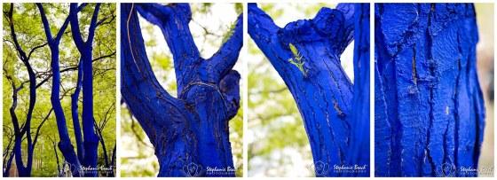 Seattle Blue Trees