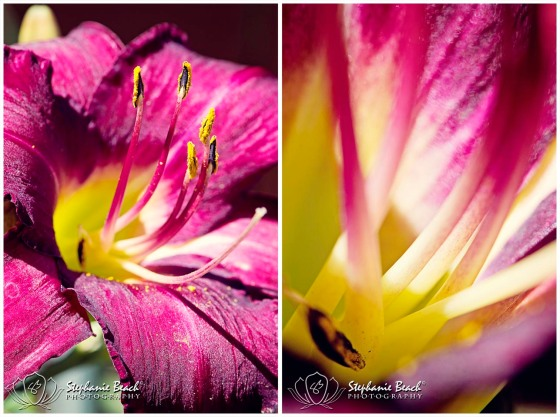 Flower Lily Macro Photography