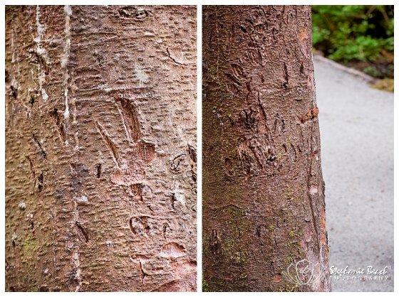 Bear Training Tree