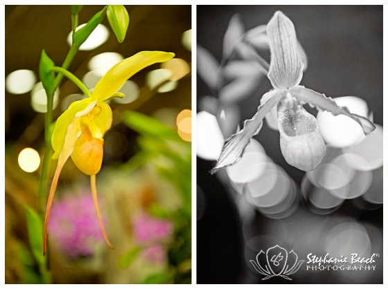 Stephanie Beach Photography - Ottawa Orchid Show