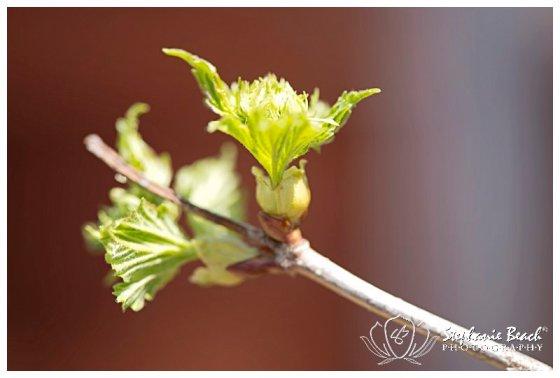 Spring Flowers Stephanie Beach Photography