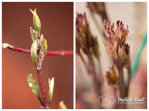Spring Flowers Stephanie Beach Photography