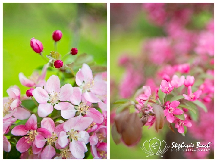 Ottawa Arboretum Blossoms Stephanie Beach Photography