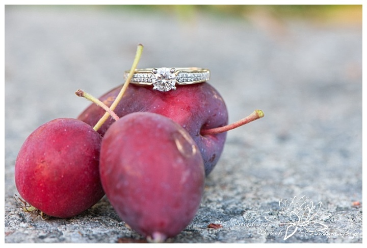 Major-hill-park-engagement-session-fruit-rings-macro-ottawa-stephanie-beach-photography