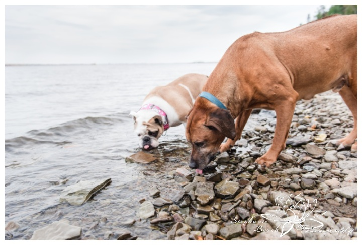 Anniversary-Portrait-Session-Sheila-McKee-Park-Stephanie-Beach-Photography-rhodesian-ridgeback-bulldog-water-river