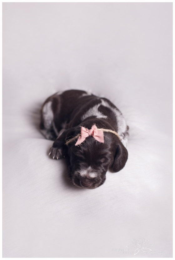 Ottawa-Newborn-Photography-Stephanie-Beach-Photography-Puppies