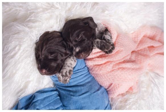 Ottawa Newborn Photography Puppies Stephanie Beach