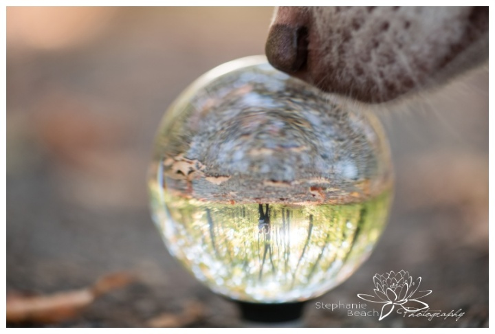 Monk-Environmental-Park-Engagement-Session-Ottawa-Stephanie-Beach-Photography