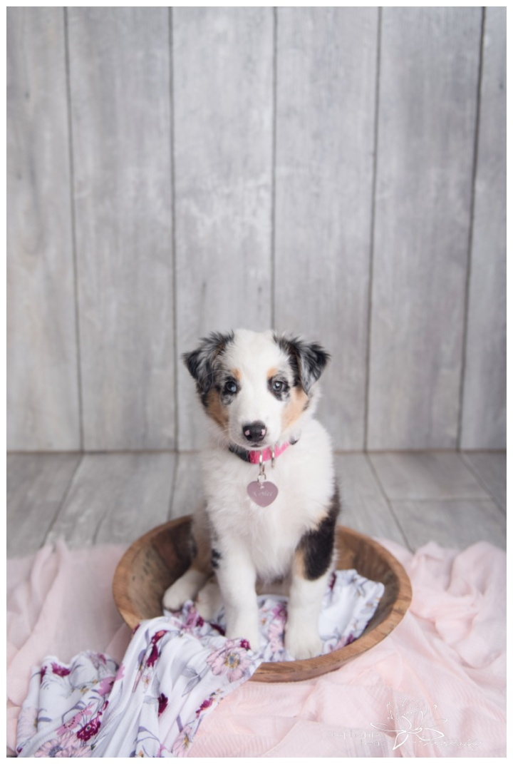 Kaylee-Photo-Stephanie-Beach-Photography-puppy