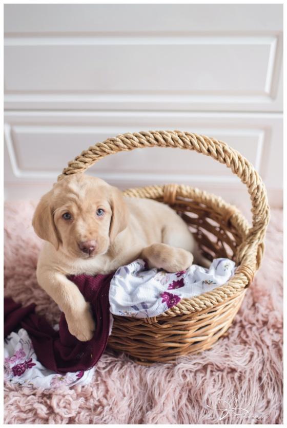 Puppy-Newborn-Photography-Ottawa-Stephanie-Beach-Photography